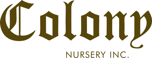 Colony Nursery